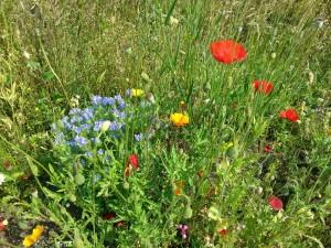 bloemen op camping de veenborg